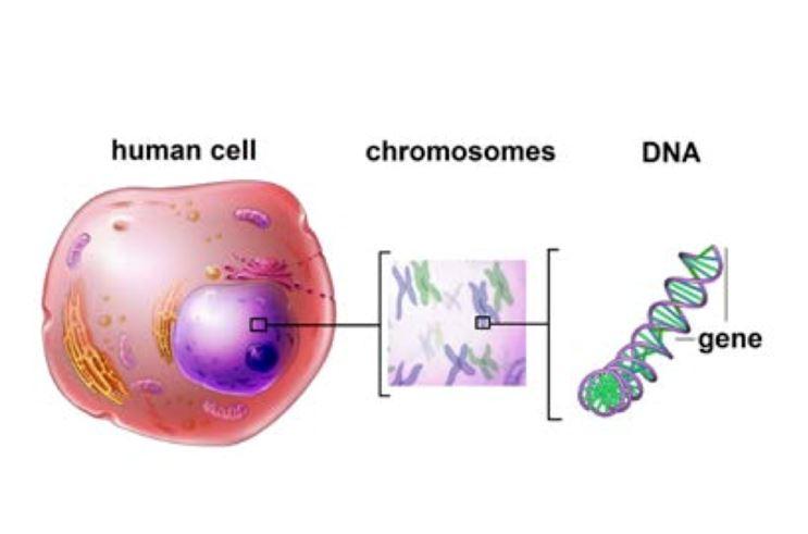 pruebas de gérmenes para cáncer de próstata